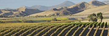 Sweeping vineyards in Santa Barbara wine county