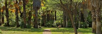 Tropical garden in Sun City