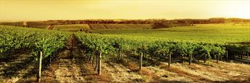 South Australian vineyard