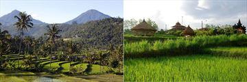 Rice Paddy Fields, Bali