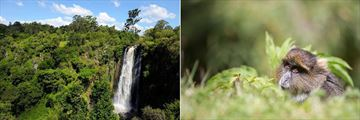 Thomson's Falls and Skykes Monkey, Aberdare National Park