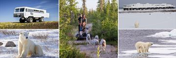 Tundra Buggy Experience, Polar Bear Sightings & Dog Cart Riding