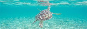 Snorkelling in Lombok