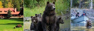 Bears at Tweedsmuir Park Lodge
