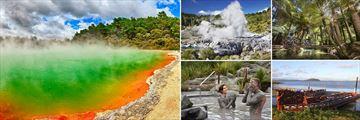 Wai O Tapu, Exploding Geyser, Lush Forests, Mud Baths & Maori Boats in Rotorua