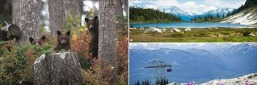Whistler Bear Watching, Landscapes & Peak 2 Peak Gondola