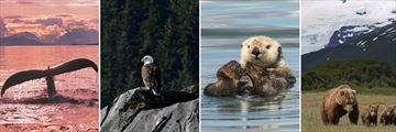 Wonderful Alaskan Wildlife Sightings