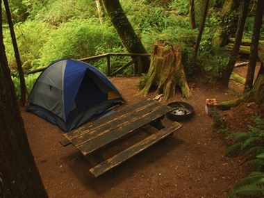 Top 10 things to do in Redwood National Park