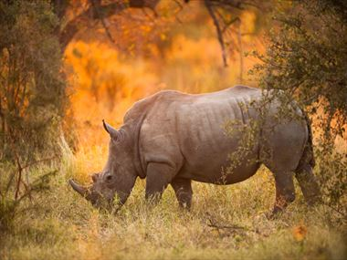 Explore Kruger National Park in search of the Big Five