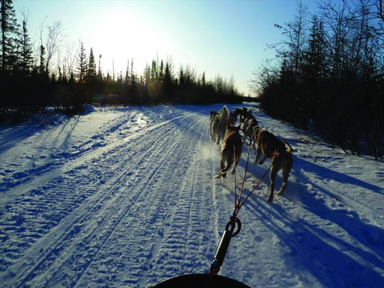 Dog sled, Churchill