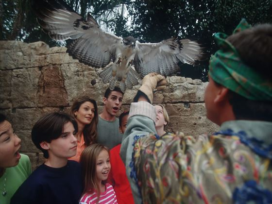 Flights of Wonder, Animal Kingdom, Walt Disney World, Lake Buena Vista, Orlando