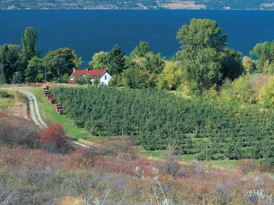 Fruit orchards near Kelowna, Okanagan Valley