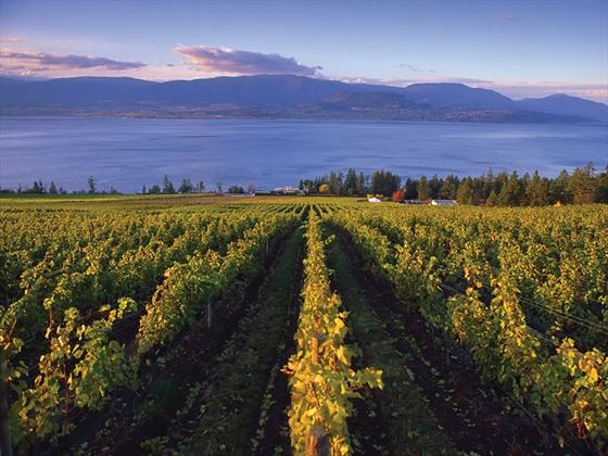 View over the vineyards to Okanagan Lake