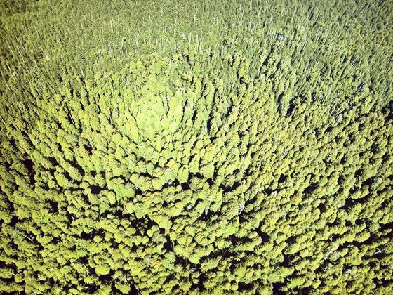 Aerial view of Redwood National Park