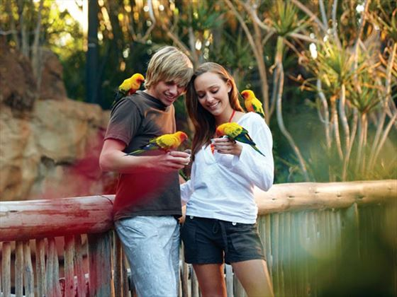 Avairy at Discovery Cove® Orlando