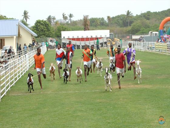 Buccoo goat racing