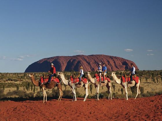 Camel ride near Uluru