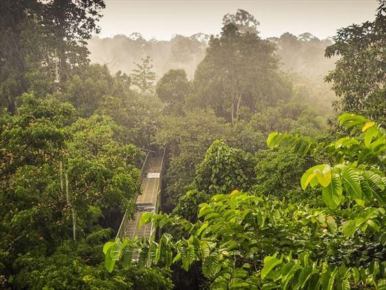 Canopy walk in Sepilok Rainforest