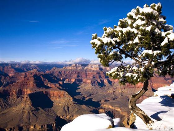 Canyon pine