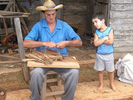 Vinales tabacco farm