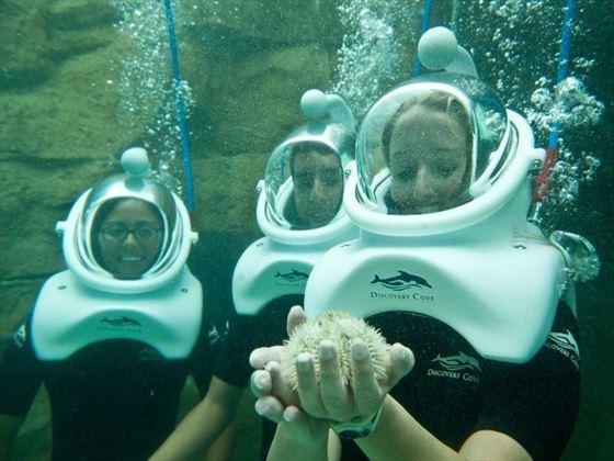Grand Reef Seaventure at Discovery Cove® Orlando