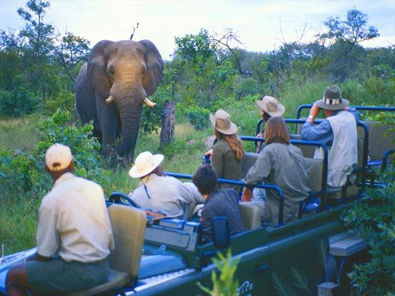Take time to see the wildlife up close on game drives
