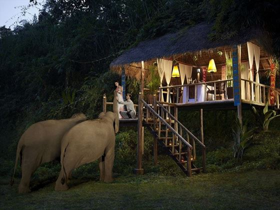 Baby Elephant Camp