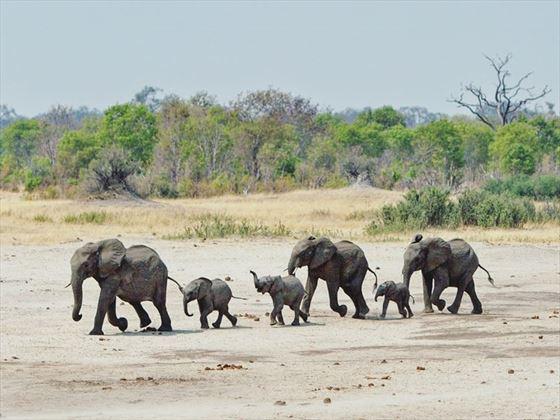 Hwange elephant parade, Zimbabwe