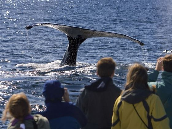 Incredible Whale Watching Experiences in Antarctica