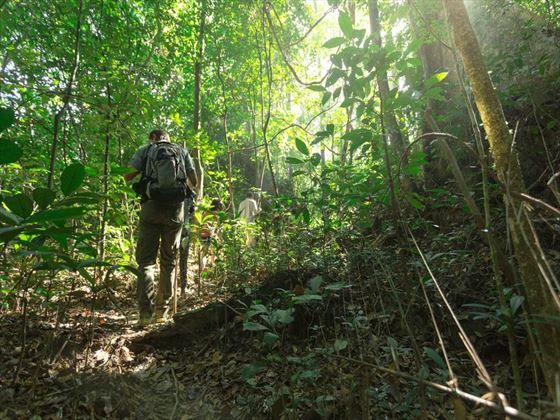 Trek and explore the surrounding rainforest with your guide
