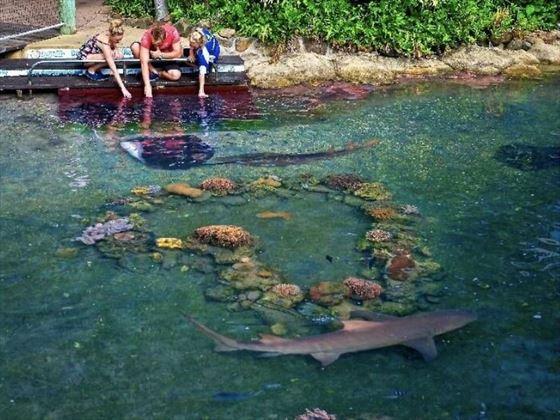 Living Reef marine life