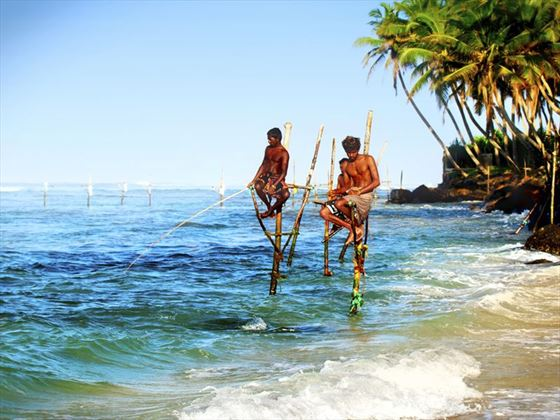 Locals stilt fishing in Galle