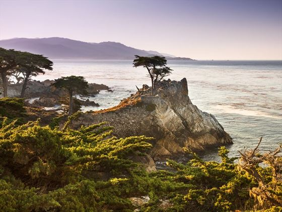 Lone cypress tree on the Monterey Peninsula