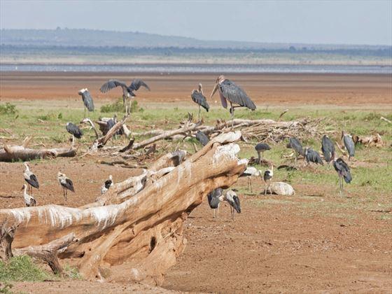 Marabou storks at Lake Manyara National Park