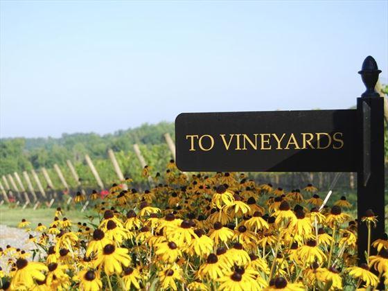 Vineyard in North Carolina
