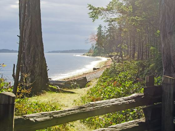 Forest trail through Rathtrevor Provincial Park