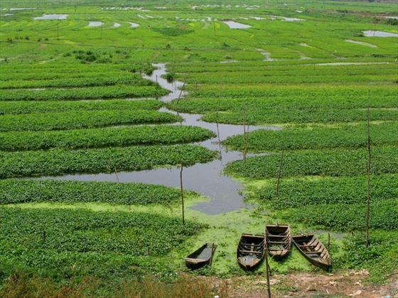 Rural rice fields in Cambodia