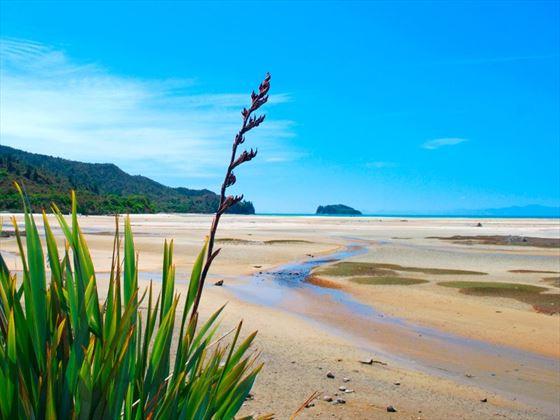Seascape at Abel Tasman National Park