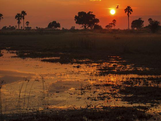 Marshlands in the Okavengo Delta