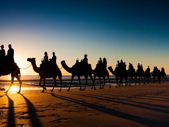 Sunset camel rides, Cable Beach