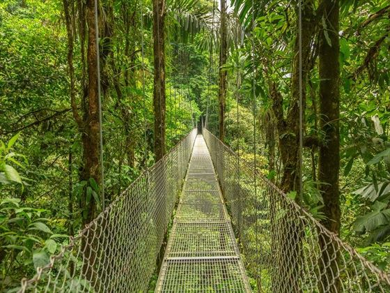 Suspended Rainforest Bridge Walkway, Costa Rica
