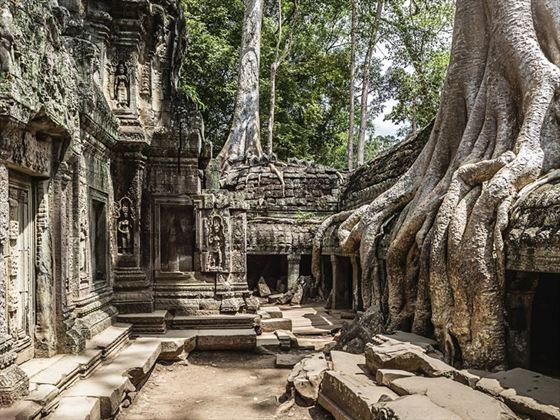 Ta Prohm Temple ruins, Cambodia