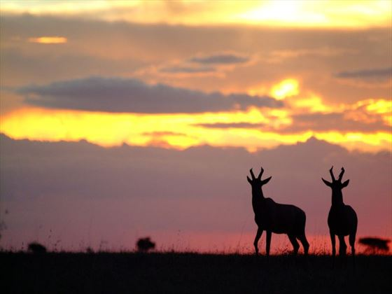 Wildlife silhousettes in Ol Kinyei