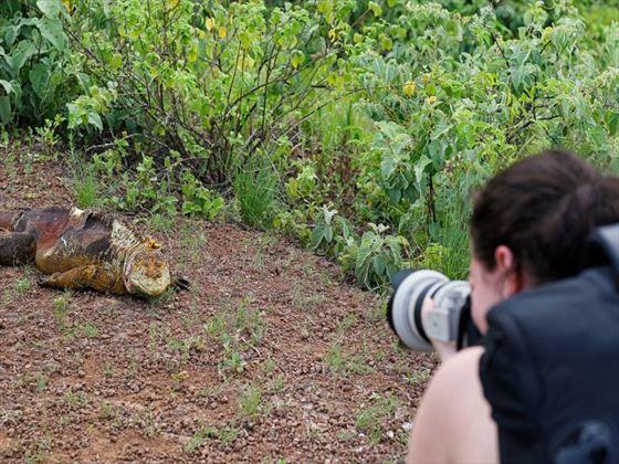Photographing land iguanas