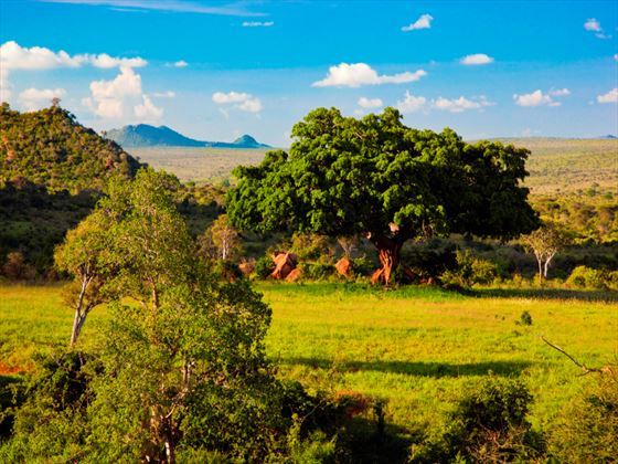 Tsavo National Park landscape