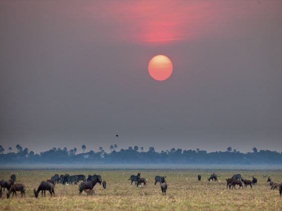 Wildebeest migration at Tarangire National Park