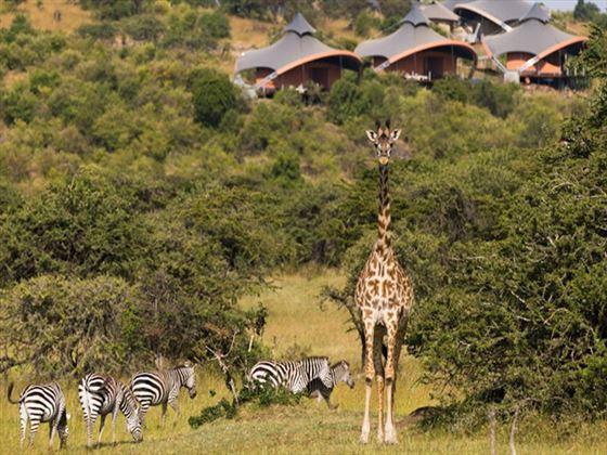 Wildlife near Mahali Mzuri