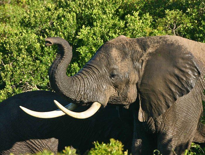 Elephant in Kenya - Jenn O'Neill