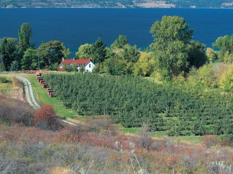 Fruit orchards in Okanagan Valley, near Kelowna
