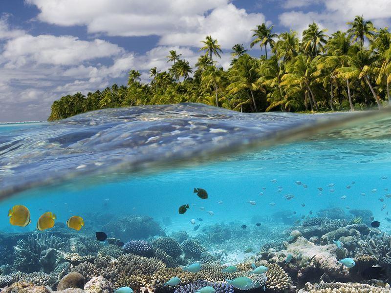aitutaki coral reef